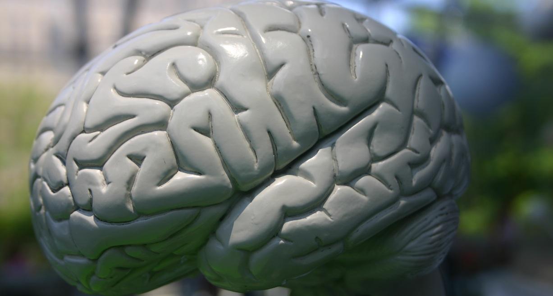 brain_cropped